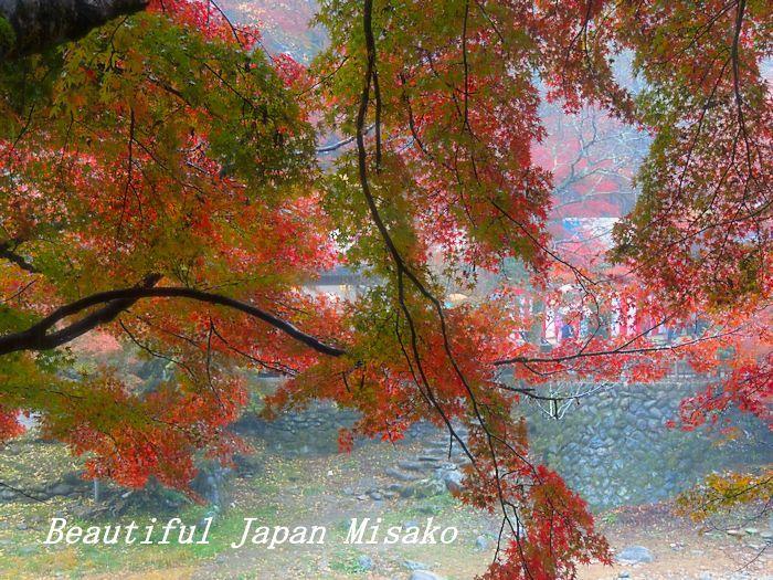 香嵐渓 椛しだれて色変化・゚☆、・:`☆・・゚・゚☆。_c0067206_21564753.jpg