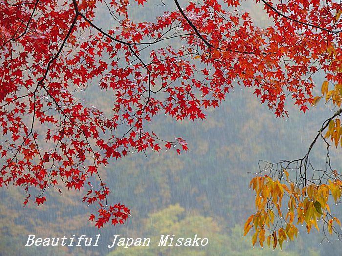 香嵐渓 椛しだれて色変化・゚☆、・:`☆・・゚・゚☆。_c0067206_21565296.jpg