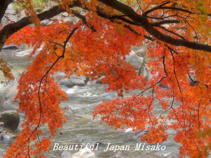 香嵐渓 椛しだれて色変化・゚☆、・:`☆・・゚・゚☆。_c0067206_21565900.jpg