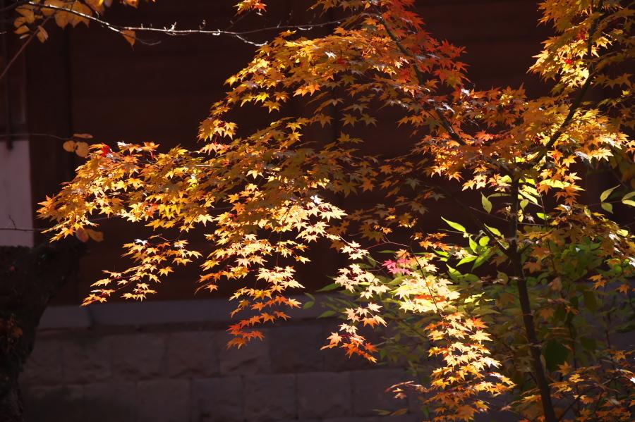 小諸城趾公園(懐古園)の紅葉3_a0263109_21431898.jpg