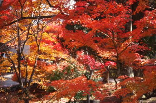 小諸城趾公園(懐古園)の紅葉3_a0263109_21432009.jpg