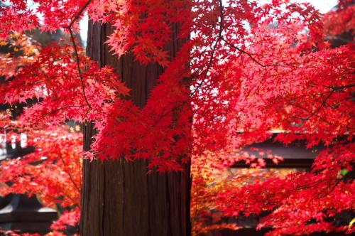 小諸城趾公園(懐古園)の紅葉3_a0263109_21434257.jpg