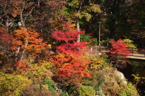 小諸城趾公園(懐古園)の紅葉3_a0263109_21444602.jpg