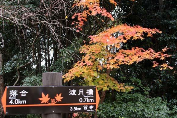 紅葉が盛り 嵐山・亀山公園_e0048413_17460453.jpg