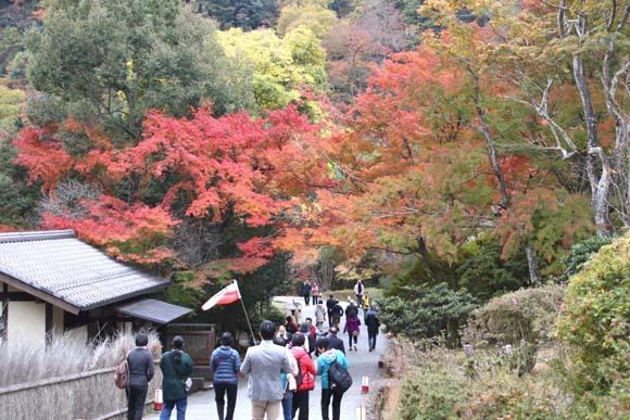 紅葉が盛り 嵐山・亀山公園_e0048413_17461449.jpg
