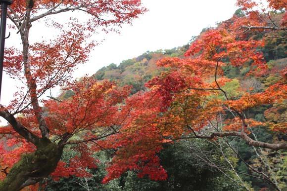 紅葉が盛り 嵐山・亀山公園_e0048413_17461808.jpg