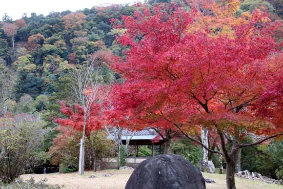 紅葉が盛り 嵐山・亀山公園_e0048413_17461866.jpg