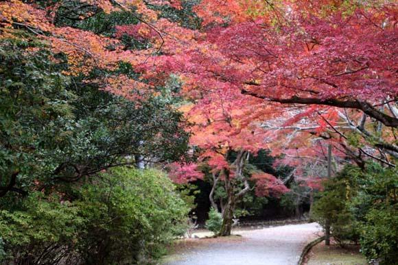 紅葉が盛り 嵐山・亀山公園_e0048413_17462658.jpg