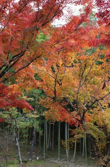 紅葉が盛り 天龍寺など_e0048413_20343458.jpg