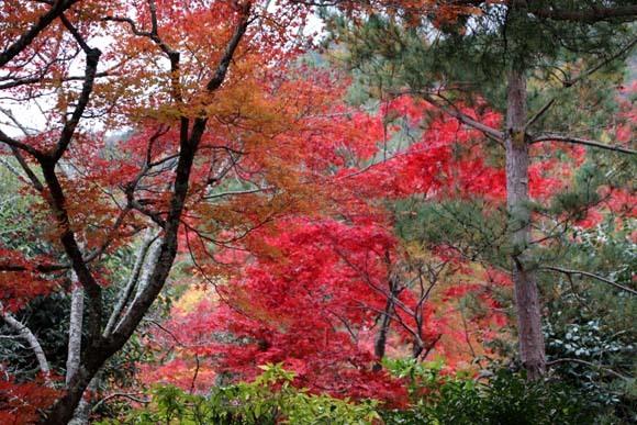 紅葉が盛り 天龍寺など_e0048413_20343796.jpg