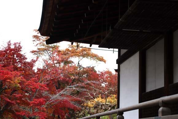 紅葉が盛り 天龍寺など_e0048413_20344147.jpg
