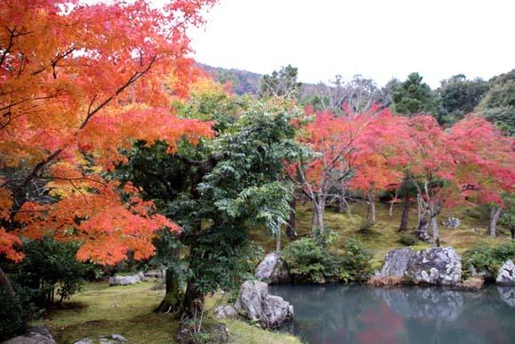 紅葉が盛り 天龍寺など_e0048413_20350056.jpg