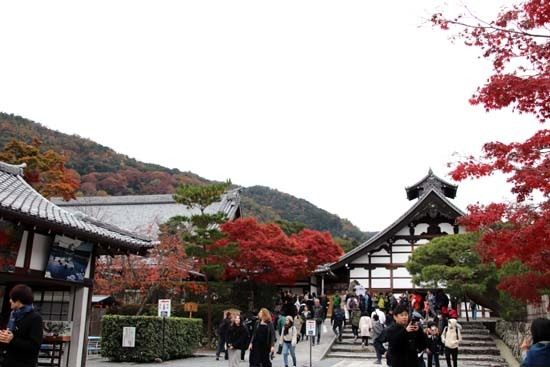 紅葉が盛り 天龍寺など_e0048413_20351717.jpg