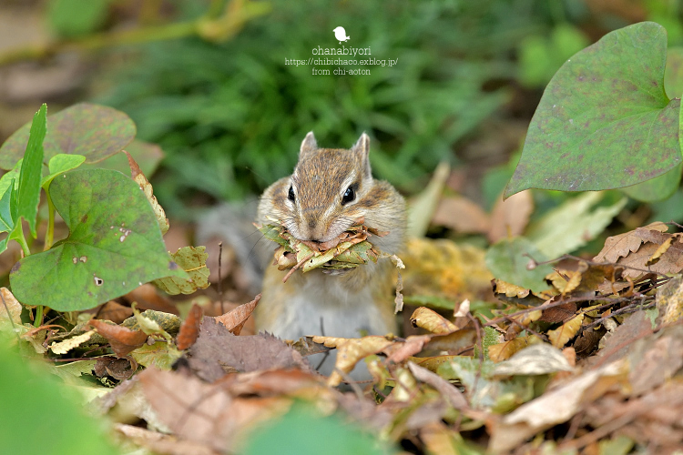 ブログテーマ「秋と言えば紅葉!みんなに見せたい秋の風景ショット2019」_f0357923_17145749.jpg
