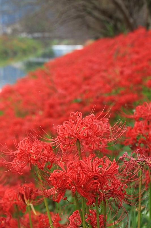 ブログテーマ「秋と言えば紅葉!みんなに見せたい秋の風景ショット2019」_f0357923_17222908.jpg