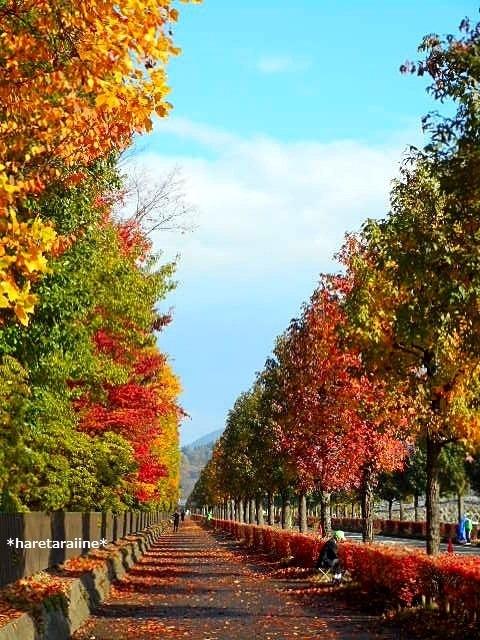 ブログテーマ「秋と言えば紅葉!みんなに見せたい秋の風景ショット2019」_f0357923_17232495.jpg