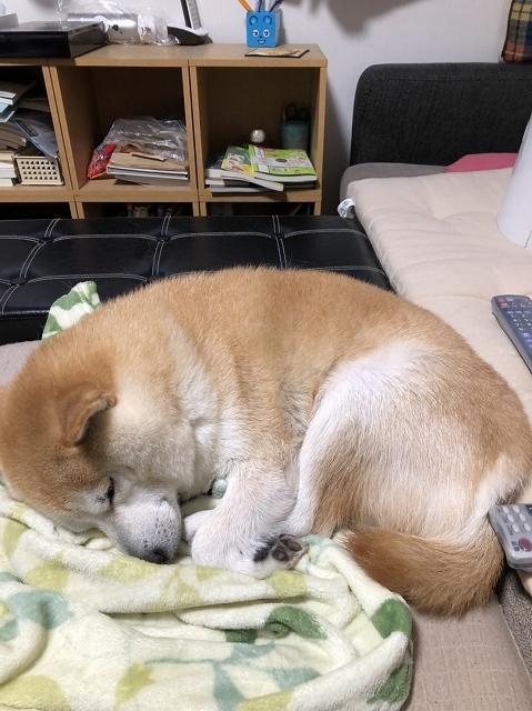 眠る犬の脱走!_e0374932_09005126.jpg