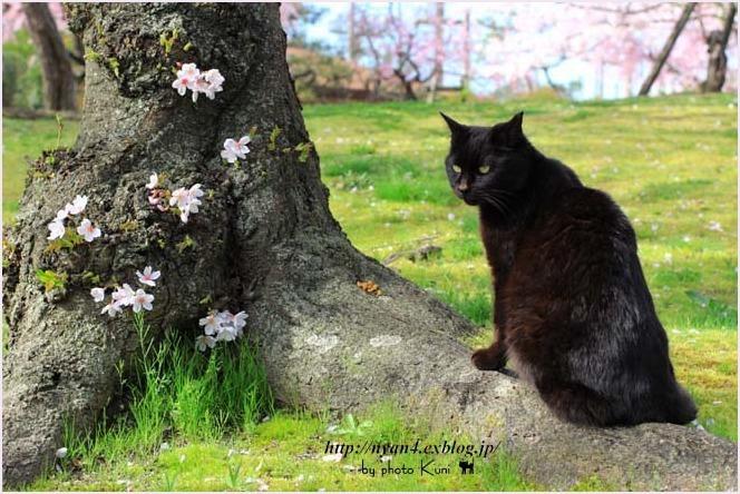 桜の木の下で・・・_f0166234_00422442.jpg