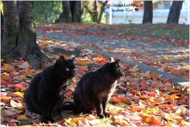 桜の木の下で・・・_f0166234_00423375.jpg