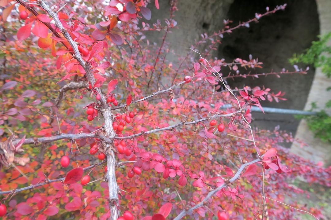 秋色の古代に栄えた町の跡、ウルブス・サルヴィア考古学公園_f0234936_7244071.jpg