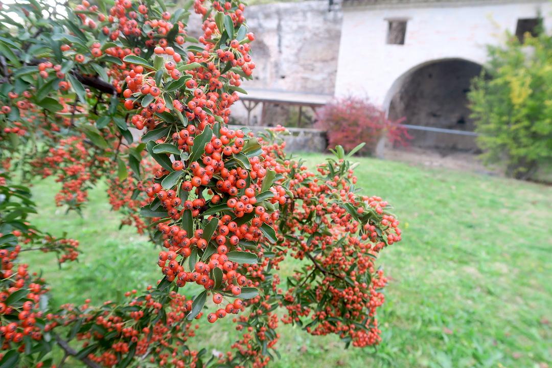 秋色の古代に栄えた町の跡、ウルブス・サルヴィア考古学公園_f0234936_761871.jpg