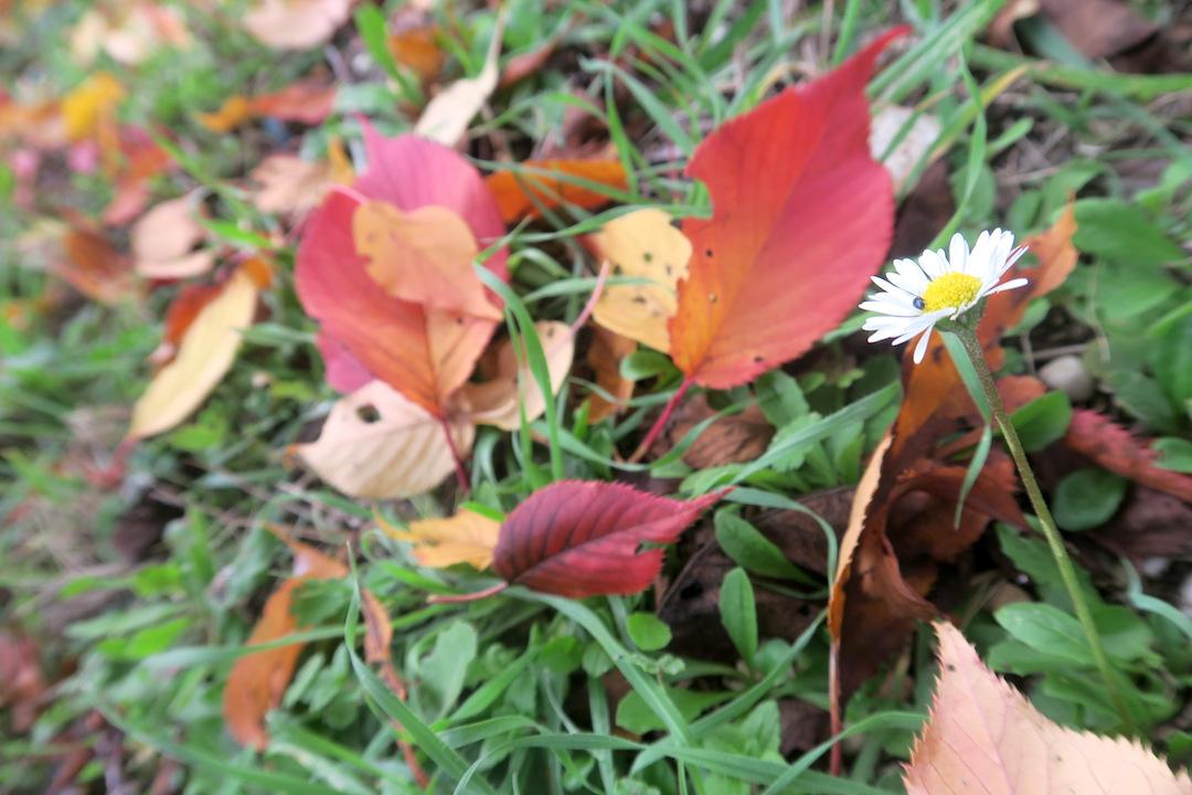 秋色の古代に栄えた町の跡、ウルブス・サルヴィア考古学公園_f0234936_8341419.jpg