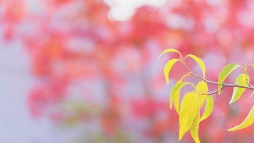 秋日和_e0241944_22285312.jpg