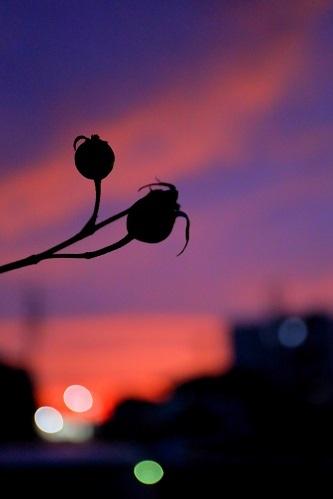 薔薇が実る頃_e0241944_22292224.jpg