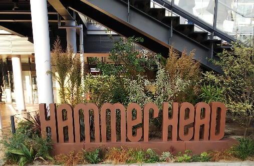 「hammer head」 へ!_c0054646_16023303.jpg