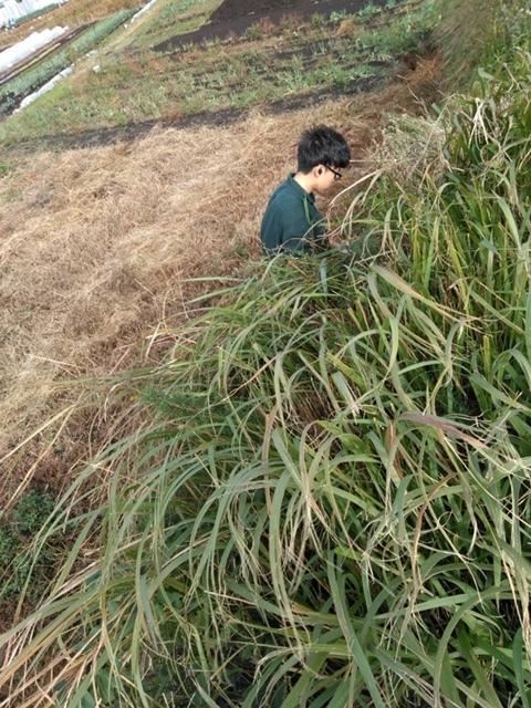 長ネギの土寄せ ブロッコリー達の防虫ネット外し ローズマリーの畝の整理 発芽していない蚕豆の播種_c0222448_12103538.jpg