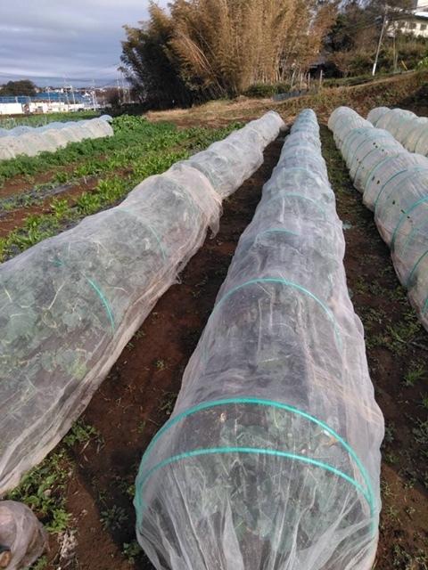 長ネギの土寄せ ブロッコリー達の防虫ネット外し ローズマリーの畝の整理 発芽していない蚕豆の播種_c0222448_12105037.jpg