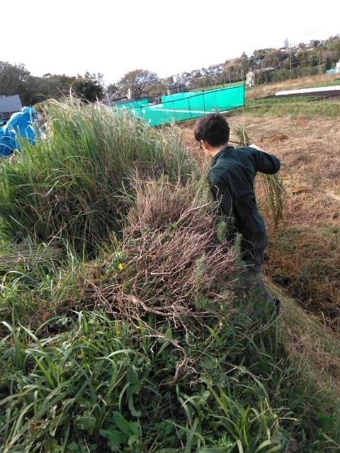 長ネギの土寄せ ブロッコリー達の防虫ネット外し ローズマリーの畝の整理 発芽していない蚕豆の播種_c0222448_12111085.jpg