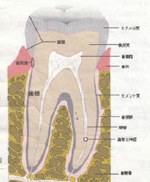 歯科治療は歯の声を聴きながら_d0338857_03401168.jpg