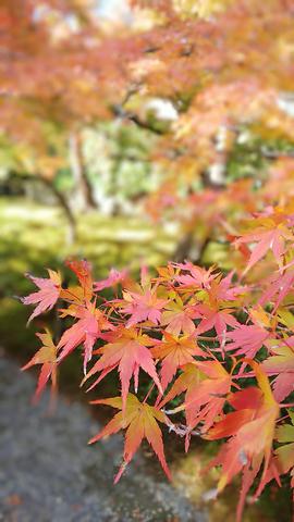 京都プチ散策_f0043559_19504454.jpg
