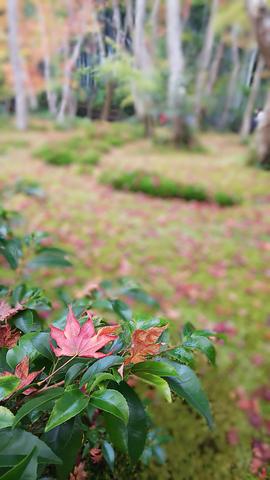 京都プチ散策_f0043559_19505912.jpg