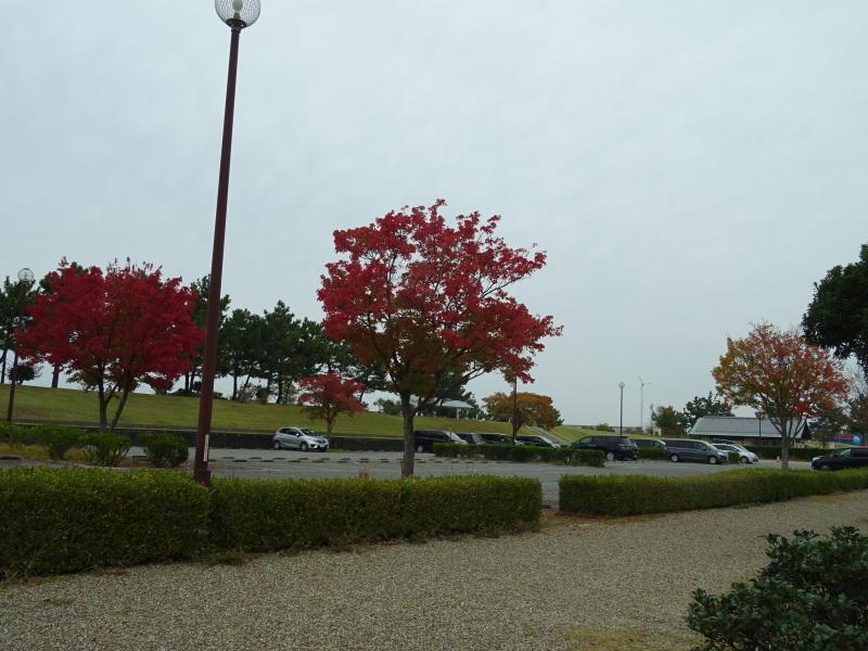 「卯の花とササユリの丘」造り・・・うみべの森_c0108460_16523301.jpg
