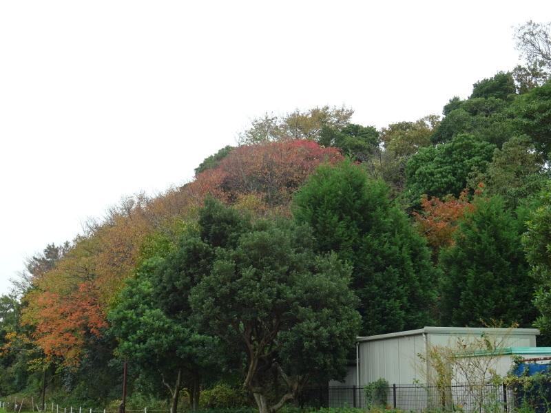 「卯の花とササユリの丘」造り・・・うみべの森_c0108460_16523350.jpg