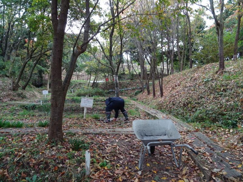 「卯の花とササユリの丘」造り・・・うみべの森_c0108460_16535617.jpg