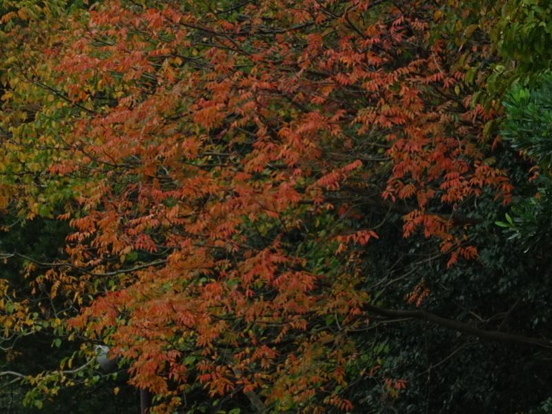 「卯の花とササユリの丘」造り・・・うみべの森_c0108460_17063788.jpg