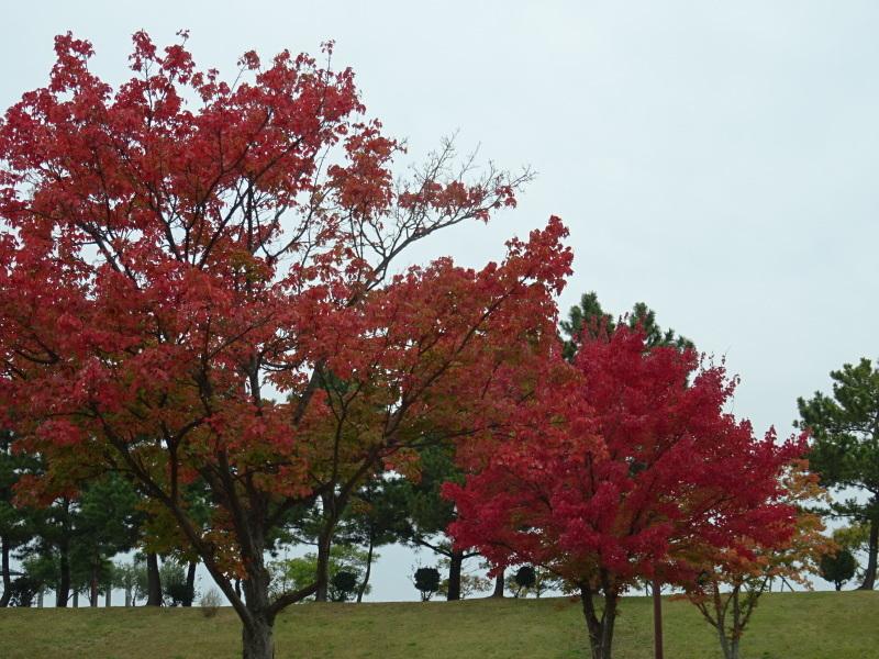 「卯の花とササユリの丘」造り・・・うみべの森_c0108460_17063797.jpg