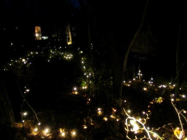 トンボの湯 * もみの木広場のクリスマスツリー★_f0236260_23515927.jpg