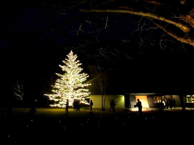 トンボの湯 * もみの木広場のクリスマスツリー★_f0236260_23544684.jpg