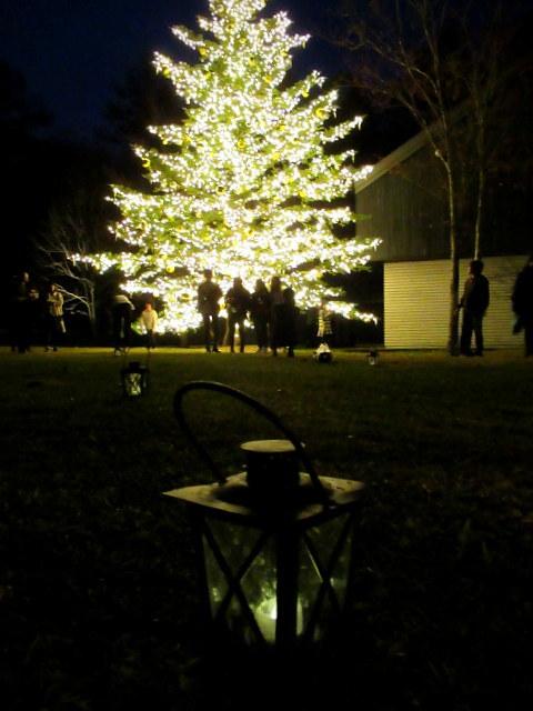 トンボの湯 * もみの木広場のクリスマスツリー★_f0236260_23550083.jpg