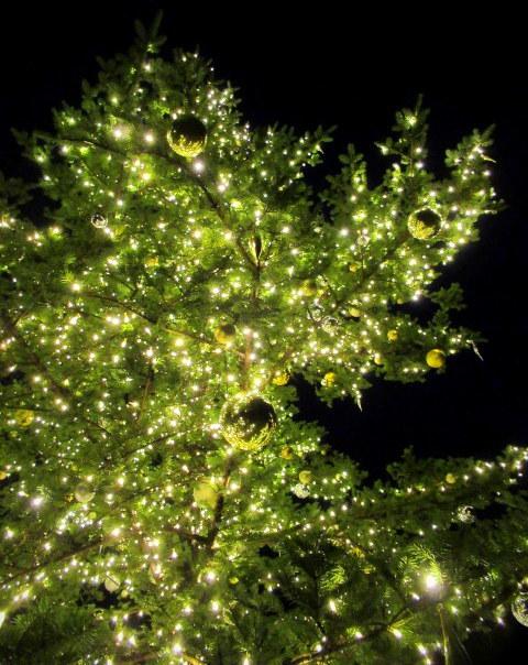 トンボの湯 * もみの木広場のクリスマスツリー★_f0236260_23554061.jpg