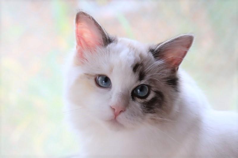 子猫トリオ_a0285571_21465163.jpg