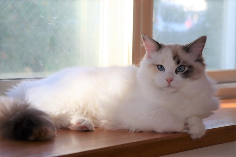 子猫トリオ_a0285571_21465843.jpg