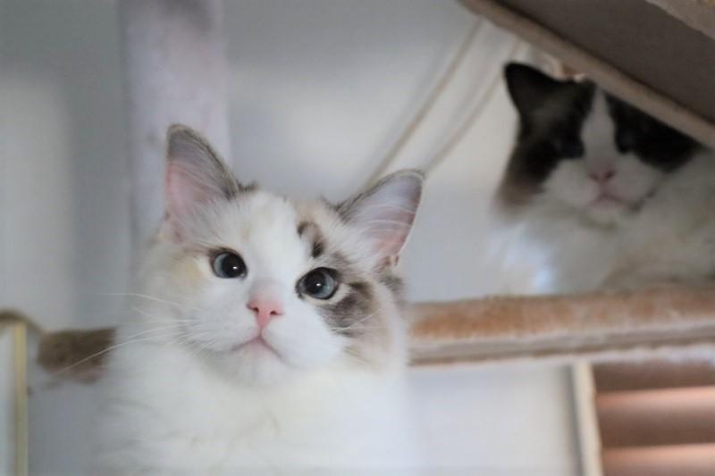 子猫トリオ_a0285571_21470868.jpg