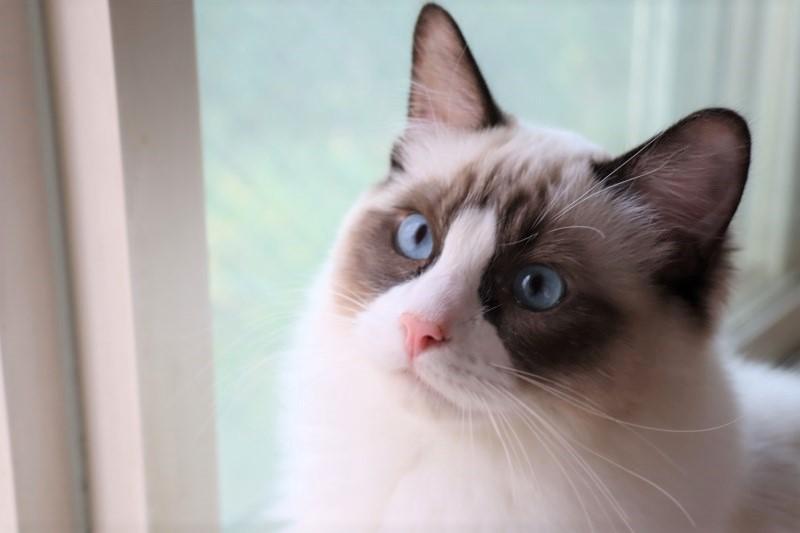 子猫トリオ_a0285571_21471452.jpg