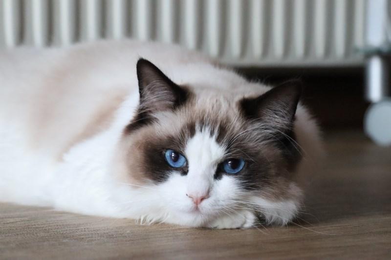 子猫トリオ_a0285571_21472840.jpg