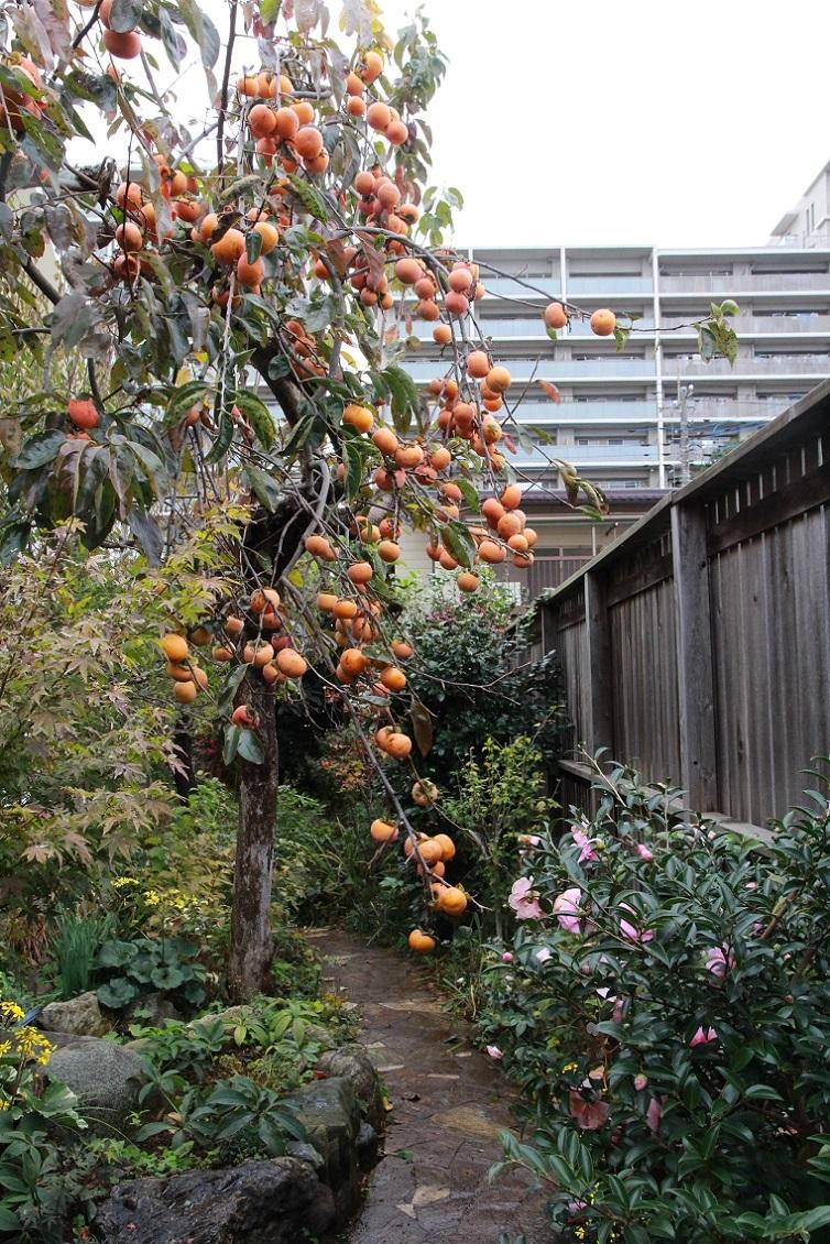 柿と山茶花_a0107574_16044597.jpg
